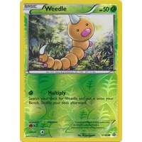 Weedle 1/160 XY Primal Clash Reverse Holo Common Pokemon Card NEAR MINT TCG