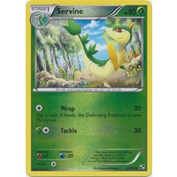 Servine 3/114 BW Base Set Reverse Holo Uncommon Pokemon Card NEAR MINT TCG
