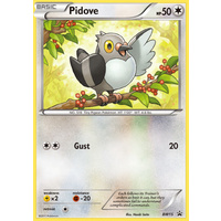 Pidove BW15 BW Black Star Promo Pokemon Card NEAR MINT TCG
